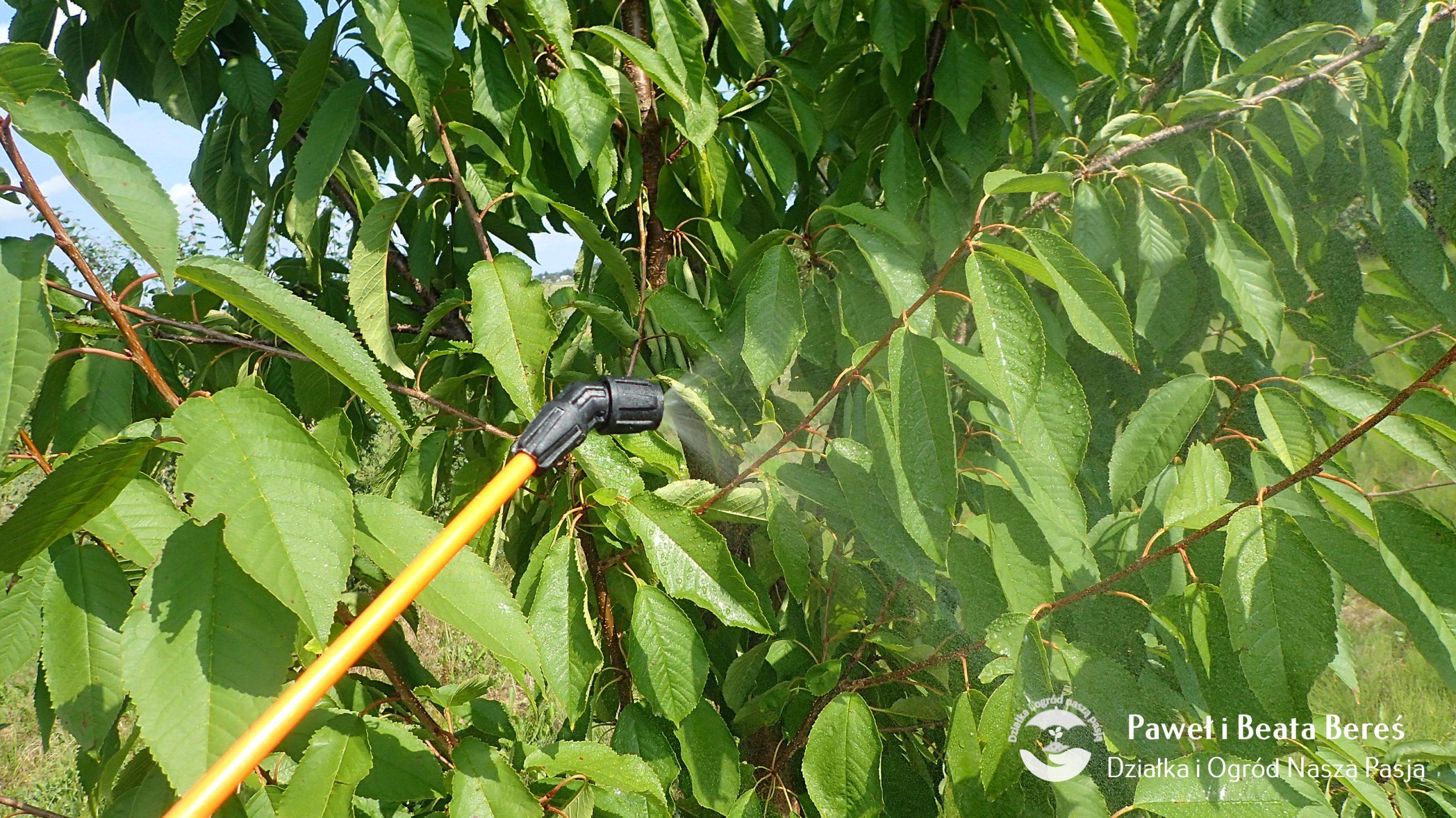Nawożenie roślin w ogrodzie mocznikiem