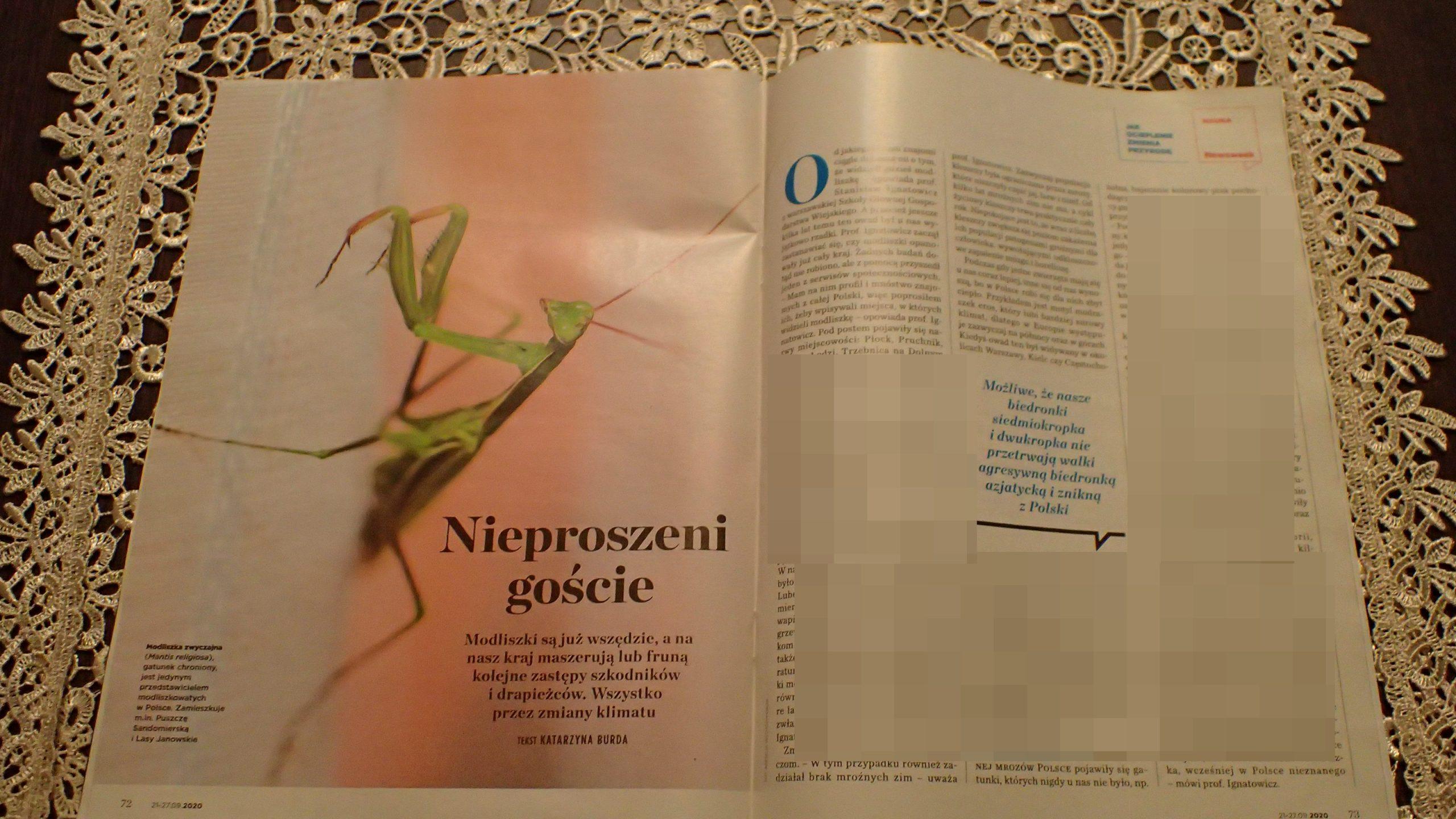 Zmiany klimatu a nowe gatunki w Polsce – wywiad na Newsweek Polska